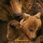 bears, movie, watch, free,