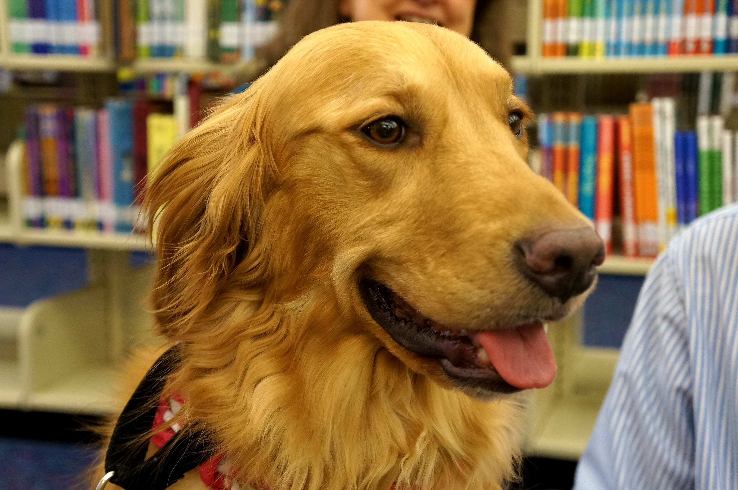 therapy, dog, read, with, free, library, children,